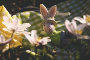 Easter Easter Bunny Spring  - suju-foto / Pixabay