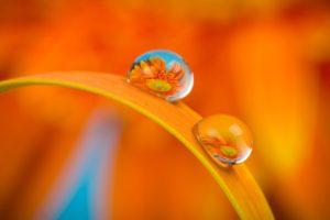 Flower Macro Water Nature Daisy  - kieutruongphoto / Pixabay