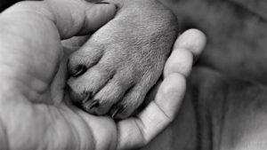 Hand Woman Paw Dog Finger Claw  - Mylene2401 / Pixabay